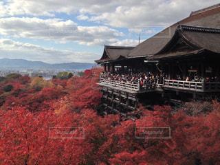 清水寺の写真・画像素材[685362]