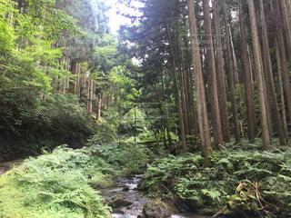 木の写真・画像素材[680913]