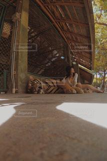 動物の写真・画像素材[681715]