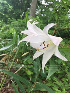 花の写真・画像素材[686857]
