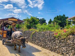 竹富島のまったり感の写真・画像素材[991901]