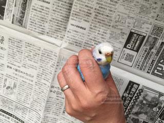 鳥の写真・画像素材[682012]