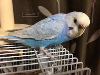 鳥の写真・画像素材[683145]