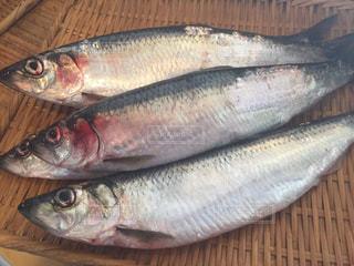 魚の写真・画像素材[683216]