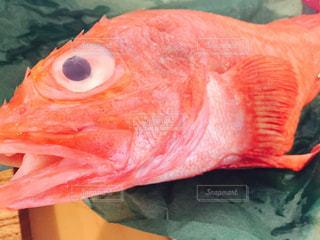 魚の写真・画像素材[683218]