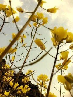 お花畑の写真・画像素材[19467]