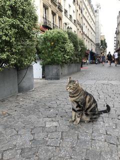 猫の写真・画像素材[682041]