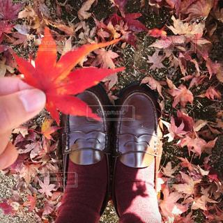 秋の写真・画像素材[682262]
