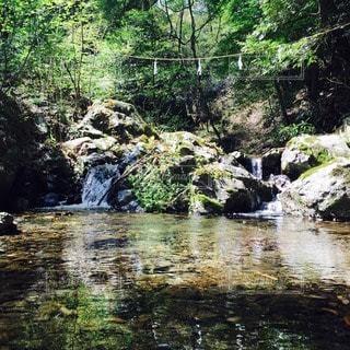 自然の写真・画像素材[21940]
