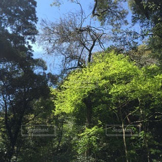 自然の写真・画像素材[21944]