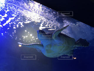 水族館の写真・画像素材[684991]