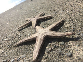 海の写真・画像素材[682358]