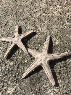 海の写真・画像素材[684084]