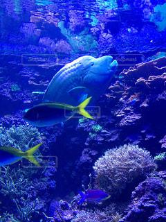 泳ぐ魚たちの写真・画像素材[769457]