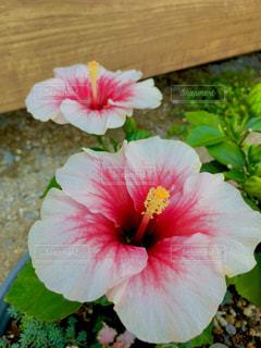 花のアップの写真・画像素材[769459]