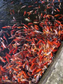 魚の群れの写真・画像素材[3067787]