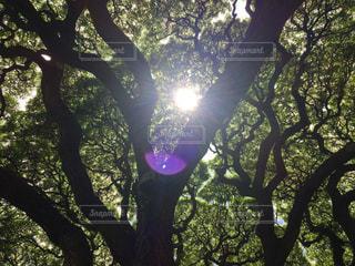 木の写真・画像素材[703204]