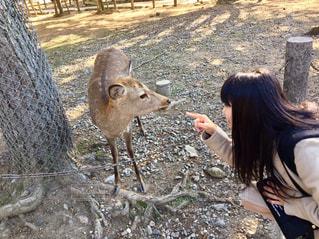 奈良公園にての写真・画像素材[767134]