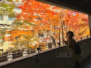 綺麗な紅葉の写真・画像素材[958648]