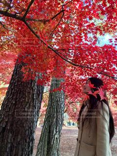 長瀞の紅葉狩りの写真・画像素材[958653]