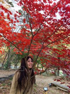 真っ赤な紅葉の写真・画像素材[958654]