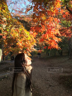 紅葉と私の写真・画像素材[958655]