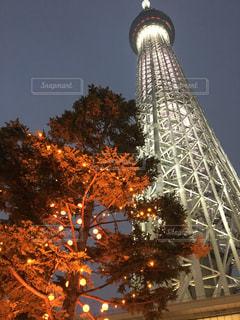 スカイツリー秋のライトアップの写真・画像素材[958667]