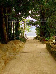 フクギ並木を抜けるとそこは美ら海の写真・画像素材[1303748]