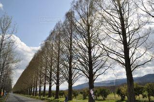 春の写真・画像素材[695795]