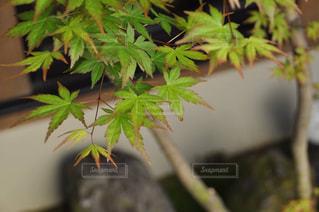 秋の写真・画像素材[695797]