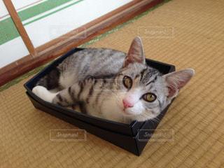 猫の写真・画像素材[685377]