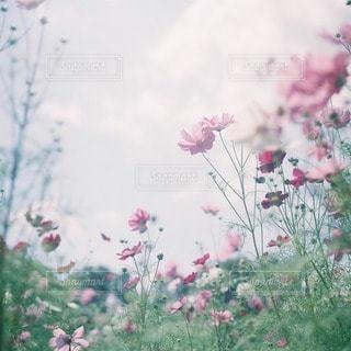 花の写真・画像素材[47993]