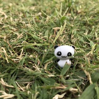 草原のパンダの写真・画像素材[777462]