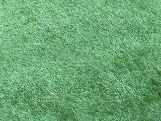 芝生の広場の写真・画像素材[782701]