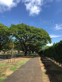 ヤシの木の写真・画像素材[683483]