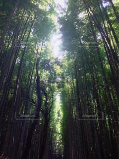 京都 - No.683387