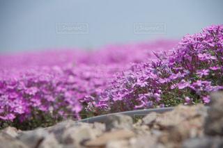 花の写真・画像素材[684562]