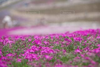 花の写真・画像素材[684564]
