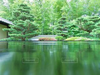 木の写真・画像素材[685762]