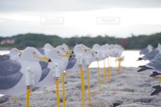 近くのビーチに傘のアップの写真・画像素材[798342]
