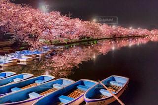 夜桜とボートの写真・画像素材[1150590]