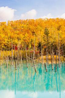 近くの水の池の写真・画像素材[1311255]