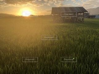 朝日に照らされた田んぼの写真・画像素材[1405429]