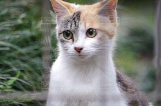 猫の写真・画像素材[688856]
