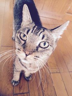 猫の写真・画像素材[698325]