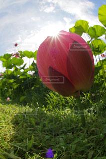 夏の写真・画像素材[684140]