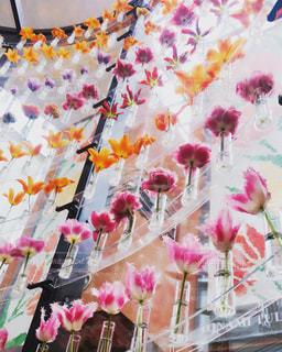 花の写真・画像素材[683587]