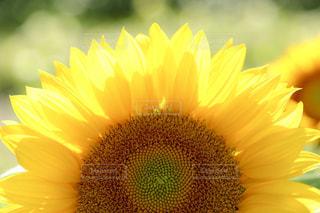 花の写真・画像素材[683646]