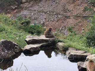 猿 - No.683733