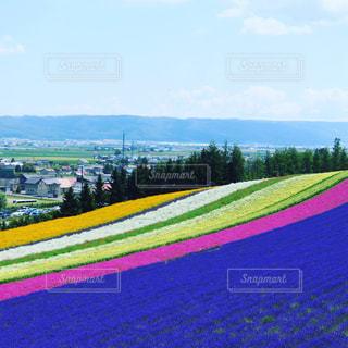 花の写真・画像素材[684431]